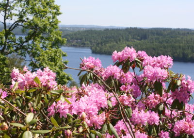 Blommor-utsikt-Hultafors